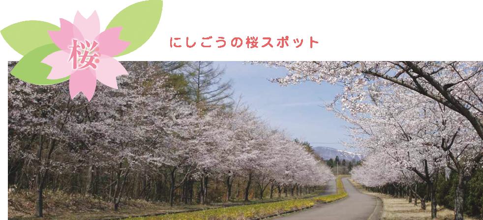 にしごうの桜スポット